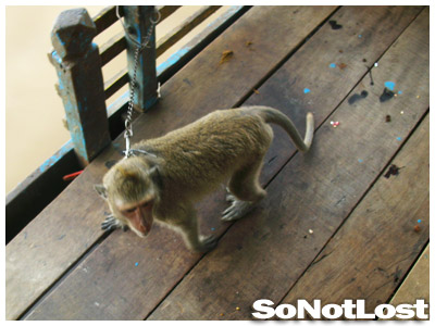 the guard monkey at Tonle Sap
